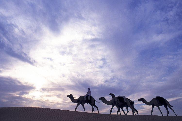 Promenade à dos de chameaux